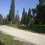 Il giardino di cipressi